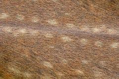Брайн кожи и меха животных Стоковое Изображение