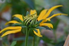 Брайн наблюдал с расплывчатым цветком в предпосылке 03 Стоковое Изображение RF