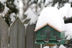 Брайн-наблюданные Juncos на фидере в зиме Стоковое Изображение