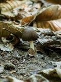 Брайн покрасил грибок стоковые изображения