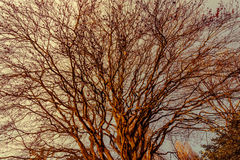 Брайн разветвляет дерево в сезоне зимы иллюстрация вектора