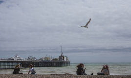 Брайтон, Англия - чайка летая над водой стоковая фотография