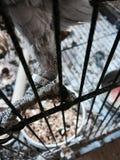 Браслет попугая на ноге Стоковое Изображение RF
