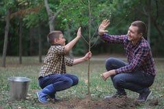 Братья засаживают дерево в саде Работа семьи Засаженное дерево в лесе Стоковые Изображения