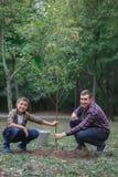 Братья засаживают дерево в саде Работа семьи Засаженное дерево в лесе Стоковая Фотография RF