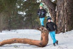 2 брать в лесе зимы Стоковое Изображение RF