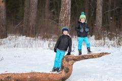 2 брать в лесе зимы Стоковые Изображения