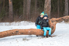 2 брать в лесе зимы Стоковые Изображения RF