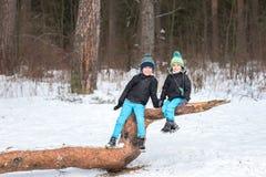 2 брать в лесе зимы Стоковое Изображение