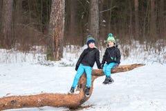 2 брать в лесе зимы Стоковые Фото