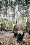 Брать джунгли стоковое фото