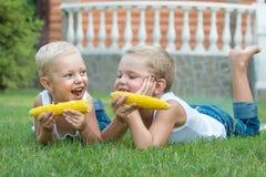 2 брать лежа на траве и едят мозоль на ударе в саде Стоковые Изображения
