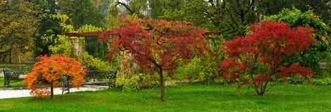 3 брать дерева Стоковое Фото