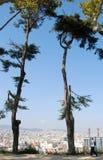2 брать деревьев Стоковая Фотография