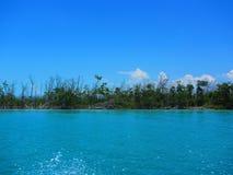 Брать лес мангровы стоковые фотографии rf