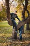 2 брать на дереве Стоковые Изображения RF