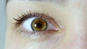 Браун-зеленый глаз молодой красивой девушки Девушка смотрит в камеру и моргает ее глазам сток-видео