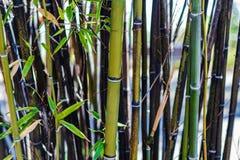 Браун утончая больную бамбуковую заплату стоковая фотография rf