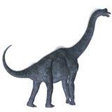 Брахиозавр над белизной Стоковые Изображения RF
