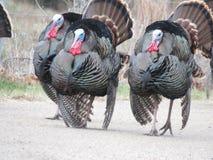 Бригада Турции Стоковые Изображения RF