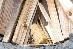 Брикеты для зажигания, увольняя среди древесины Стоковая Фотография