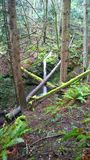 Британская Колумбия, побережье, дождевой лес Стоковая Фотография