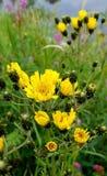 Бриллиантово-желтый стоковое фото rf