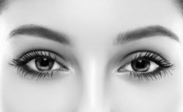 Бровь женщины глаз наблюдает плетки черно-белые стоковые фото