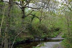 Брод на дороге между сериями деревьев стоковое изображение rf