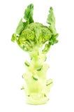 брокколи свежий Стоковая Фотография