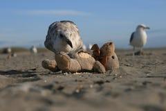 Бросание всегда и чесальщики пляжа Стоковое Изображение