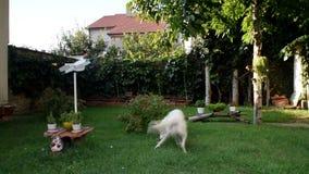 Бросать шарик для того чтобы выследить в саде видеоматериал