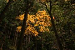 Бросающийся в глаза покрашенные листья Стоковая Фотография RF