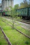 Брошенная железная дорога которая росла с деревьями Стоковые Изображения RF