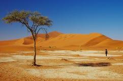 Бродяжничать в пустыне Стоковые Изображения RF