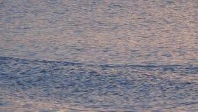 Брызгать воду на спокойной воде сток-видео