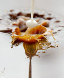 брызгать молока кофе Стоковые Фото