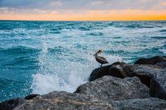Брызгать пеликана стоковое изображение rf