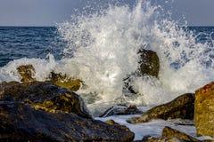 Брызг воды красоты Стоковые Изображения