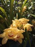 Брызг желтых орхидей Стоковые Изображения