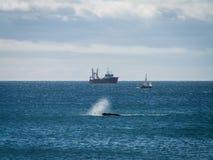 Брызг и корабль правильного кита отделывая поверхность Стоковое фото RF