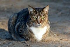 Брюзгливый кот Стоковая Фотография