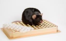 Брюзгливая мышь на шкафе трубки Стоковая Фотография RF