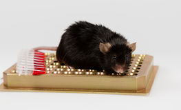 Брюзгливая мышь на шкафе трубки Стоковое Фото