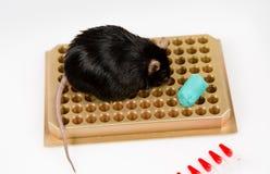 Брюзгливая мышь на шкафе трубки Стоковая Фотография