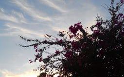 Бугенвильь с небом Стоковые Изображения RF