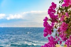 Бугинвилия от Греции Стоковые Фото