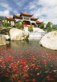буддийский висок goldfish фарфора Стоковые Фото
