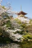буддийский висок kiyomizudera вишни стоковое изображение rf