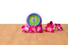 Будильник и орхидея цветков фиолетовая на древесине над белой концепцией времени весны предпосылки Стоковые Изображения